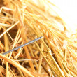 Stock Photo: Needle in a haystack.