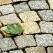 LEAF ON PAVE — Stock Photo