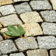 LEAF ON PAVE — Stock Photo #11798642