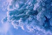 Decorative pine and snow — Stock Photo