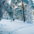 Forest Trail in cold period — Stok fotoğraf