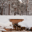 Water source in winter wood - Stock Photo