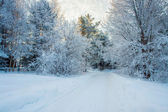 Winter road in the fairy-tale forest — Stock Photo