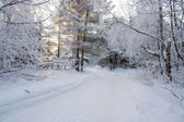 Winter road in forest — Stok fotoğraf