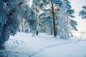 Forest Trail in cold period — Stock Photo