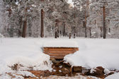 Water source in winter wood — Stockfoto