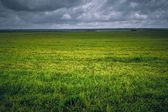 Background field with green grass vignette on plains — Stock Photo