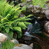 The forest creek — Stock Photo