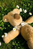 The sun shines on Teddy... — Stock Photo