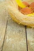 Eier in einem nest — Stockfoto