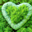 Green green heart - Stock Photo