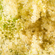 Stock Photo: Meadowsweet background