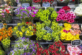Selection of flowers on display in Paris, France — Stock Photo