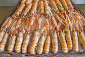 Langoustines on ice on a french market, Paris — Stock Photo