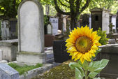 Cemetery in Paris, France, with sun flower — Stock Photo