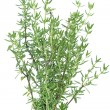 Fresh thyme herb on white - Stock Photo