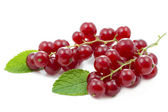Red currants with mint leaf — Stock Photo