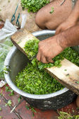 Cutting coriander in Delhi, India — Stock Photo