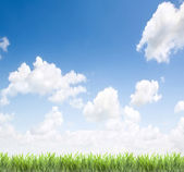 Grass and sky as background — Stock Photo