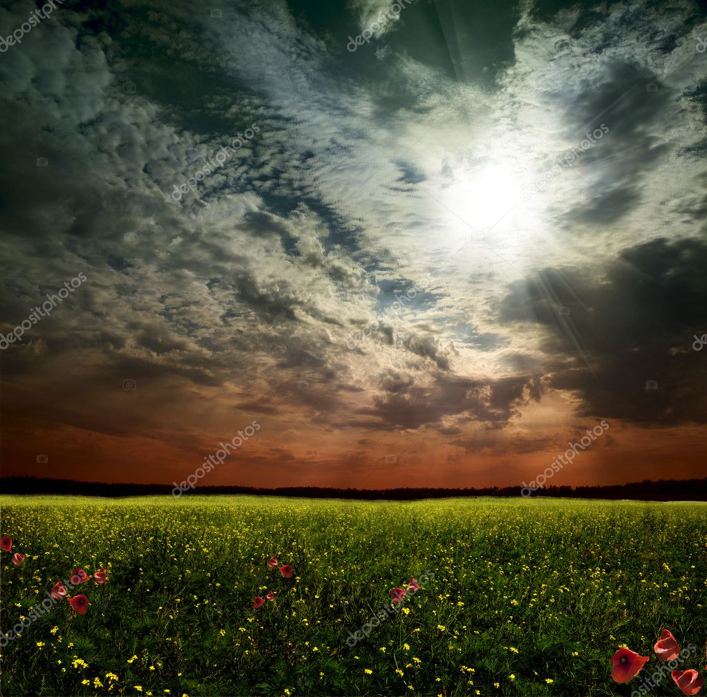 A woman in a field in the sky  Photo #11039372