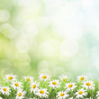Daisies on spring background. — Stock Photo