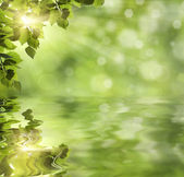 Fresh green leaves over water — Stock Photo