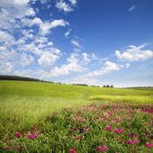 Prado verde. Primavera — Fotografia Stock