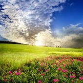 Prado verde. primavera — Foto de Stock