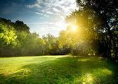 Jasné paprsky světla svítí skrz les v časných ranních hodinách — Stock fotografie