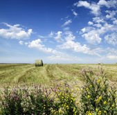 Green meadow — Stock Photo