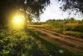 Campo y camino de tierra — Foto de Stock