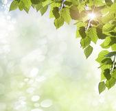 Primavera a sfondo — Foto Stock