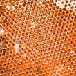 Honey comb and a bee working — Stock Photo #10951700