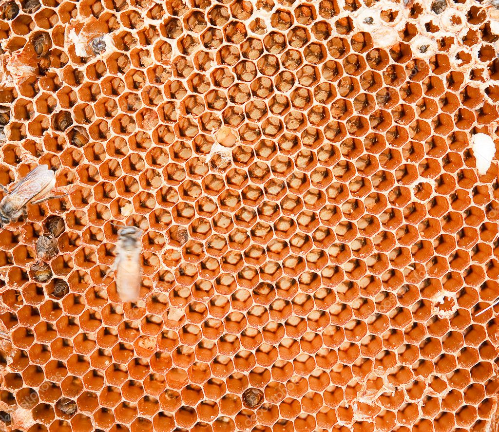 Honey comb and a bee working — ストック写真 #10951700