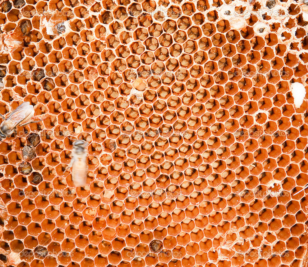 Honey comb and a bee working — Stockfoto #10951700