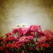 Pink chrysanthemum flowers — Stock Photo #11081827