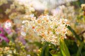 Orquídea branca. — Foto Stock