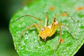 Spinne auf der grashalm. — Stockfoto