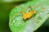 Spider on a blade of grass. — Stock Photo
