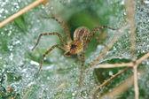 Araignée — Photo