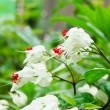 Stock Photo: White flower.