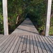 Wood bridge — Stockfoto #10954615