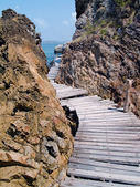 Seaside trä bro — Stockfoto