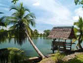 Coconut and small hut — Stock Photo