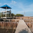 Stock Photo: Tower view point and ffield of bamboo tube