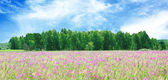 Blossoming meadow and the wood — Stock Photo