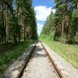 The lonely railway in taiga — Stock Photo