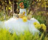Yellow ducklings — Stockfoto