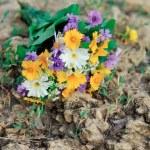 Wild flowers — Stock Photo #11639636
