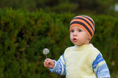 The boy with a dandelion — Stock Photo